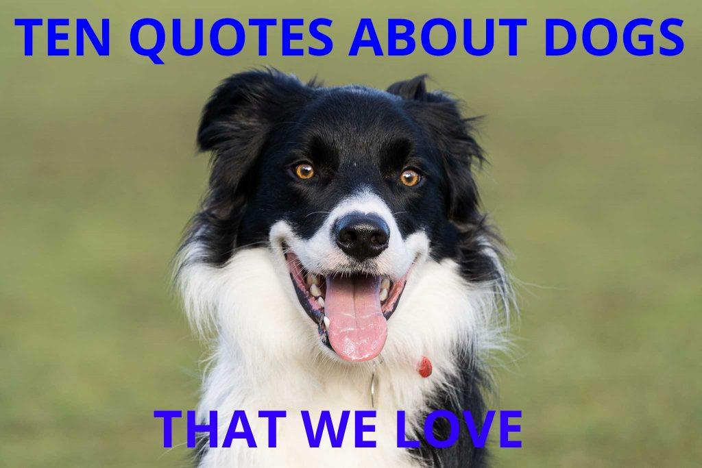 Ten Dog Quotes