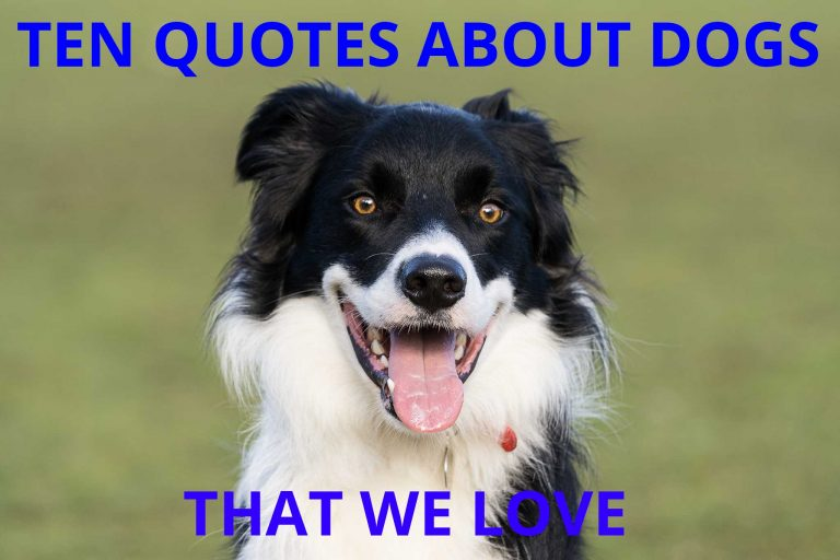 Ten Quotes about Dogs that we love