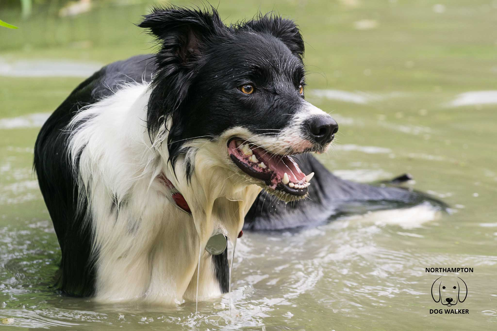 Keeping dogs cool in hot weather