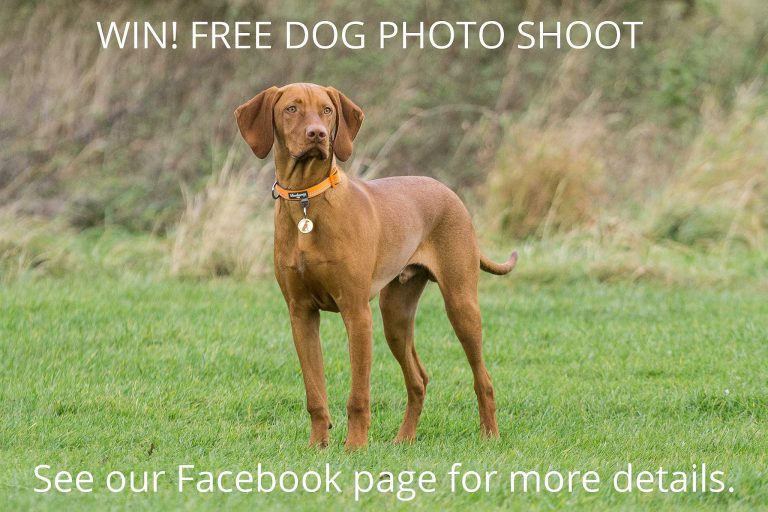 Dog Photo Shoot Competition!