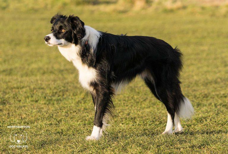 Raw Feeding Dogs – Benefits & considerations