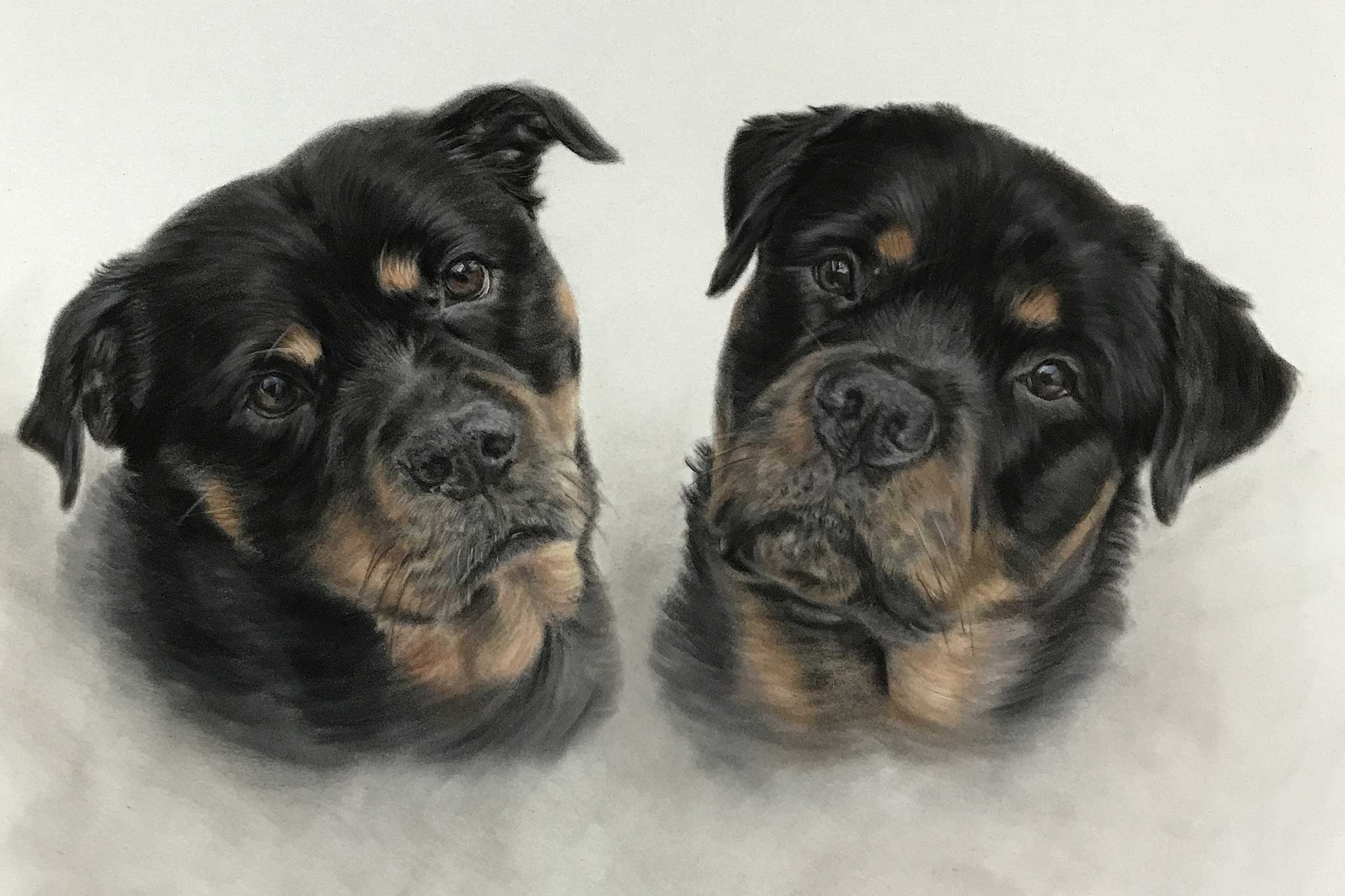 Pet Portraits - Two Rottweilers
