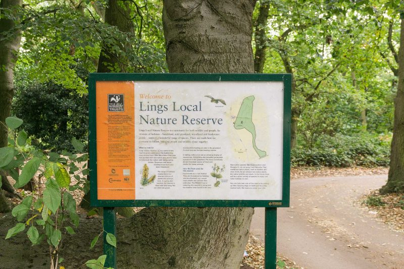 Lings Wood Nature Reserve