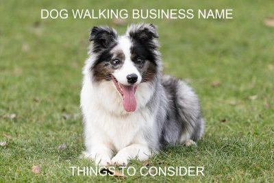 Dog Walking Business Name Article