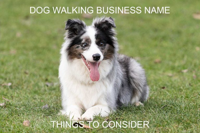 Dog Walking Business Name – Things to Consider