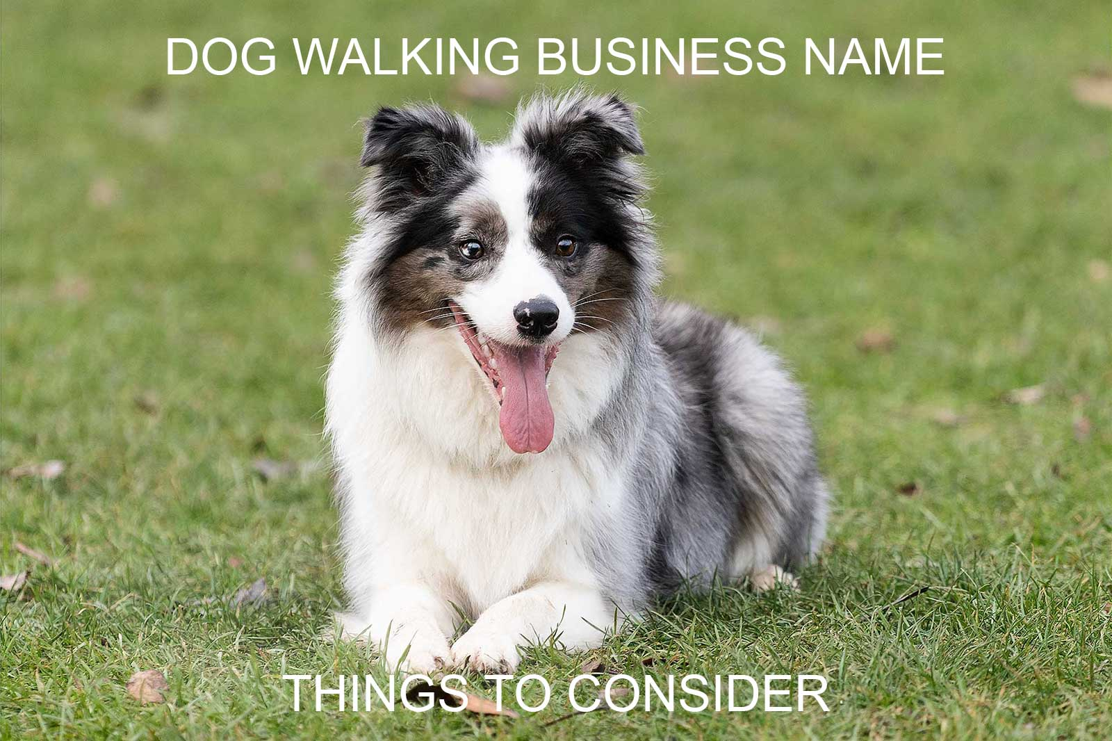 Dog Walking Business Name Article