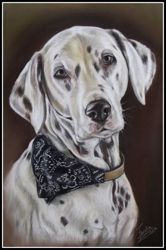 Dalmatian Dog Portrait