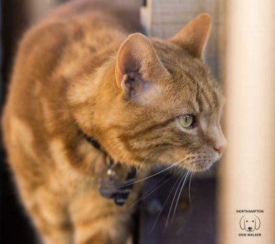 Ollie Cat Sitting