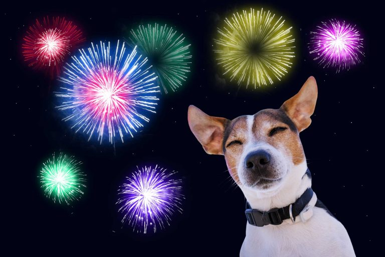 Dogs and Fireworks – Advice for dog owners
