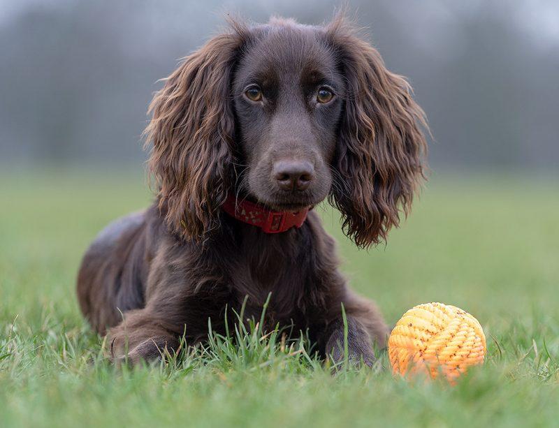 Dog Walking at Abington Park