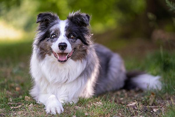 Northampton Dog Photographer