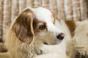 Dog Boarding Northampton - Thomas