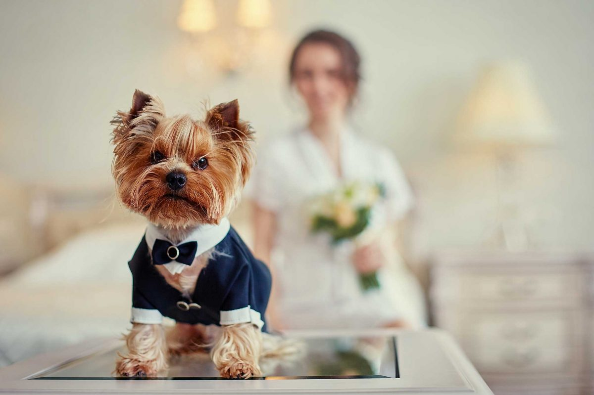 Wedding Day Dog Care - Woof Woof Weddings